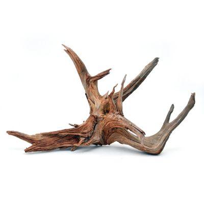 Mangrow Kökü Büyük Boy 30-56 cm